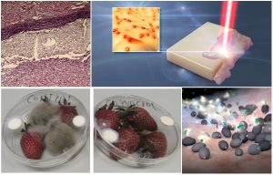 controlled drug release using gold nano-particles and laser, bio-compatible adhesives as sutures replacement, curing fungal infections using bacteria, a patch for food preservation